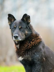 Samson, The Great Protector